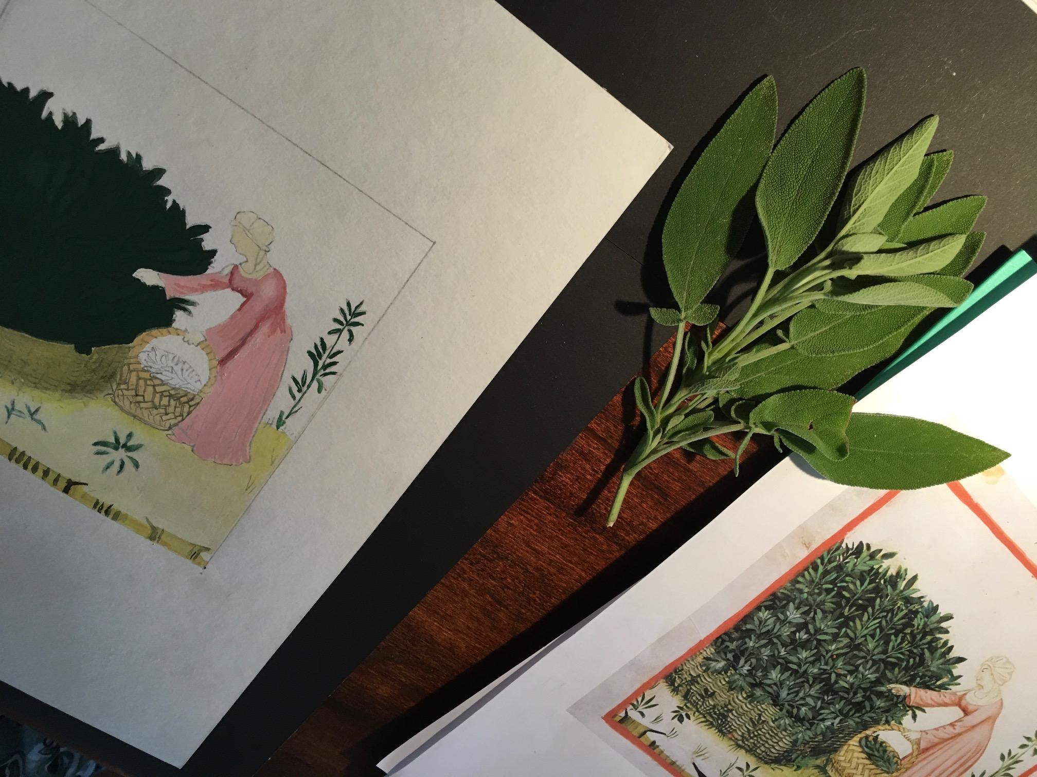 obrazek kobieta zbierająca zioła